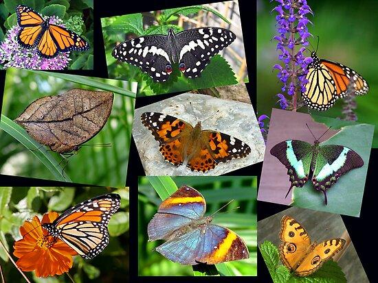 Beautiful Butterflies by Kelly Cavanaugh