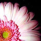 pink flower by Arissa