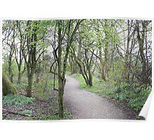 Forest path landscape Poster