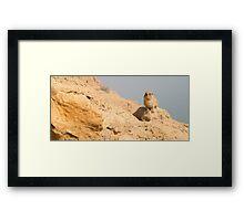 Israel, Judean Desert, Rock Hyrax, (Procavia capensis) Framed Print