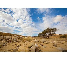 Enduring Acacia tree survives in the Desert Photographic Print