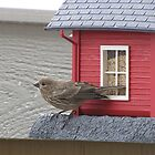 Lady Finch at the Birdhouse by janetmarston