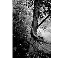 Wildwood embrace Photographic Print