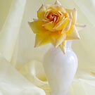 Yellow Rose  by DIANE  FIFIELD