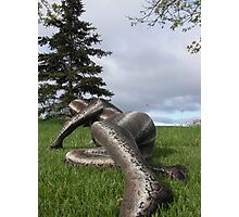Sssssnake in the Grass set 2-7 Photographic Print