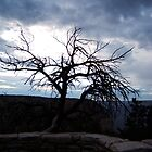 Dead Tree by jensch8