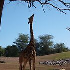 Giraffe Eating Tree by jensch8