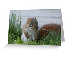 Red Squirrel Baby  Greeting Card