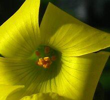 yellow wonder by Nurgen ~~