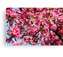Pink blossom tree Canvas Print