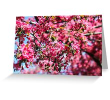 Pink blossom tree Greeting Card