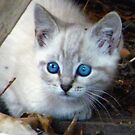 Baby Blue Eyes by R&PChristianDesign &Photography