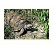 Turtle Wax Art Print