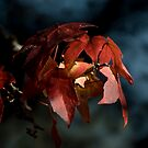 Autumn Glory by emmmee
