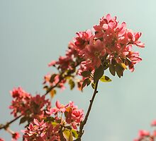 Pink blossom tree. Retro version by HelgaScand