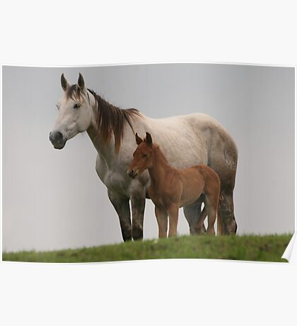 Broodmare and her young foal Poster