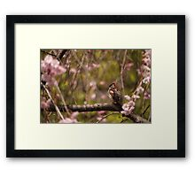 Sparrow and Blossoms Framed Print