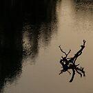 Twilight on the Murrumbidgee by emmmee