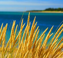 Sea Grass by SharonJH