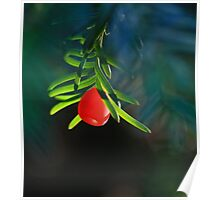 Yew Berry Poster