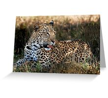 Phinda Leopard portrait Greeting Card