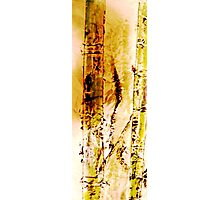 Bamboo#2 Drawing Day 09 Photographic Print