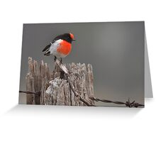 Red Capped Robin #2 Greeting Card