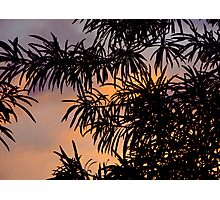Hawaiian Sillouette Photographic Print