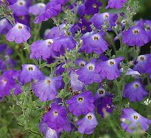 purple petunia by mrivserg
