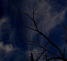 blue sky by dieselpete