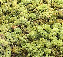 Grapes by Erin-Lloyd