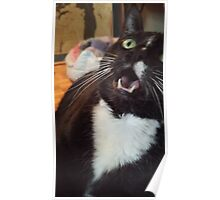 Tux the Cat #4 Poster