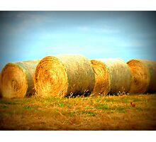 Golden Bales Photographic Print