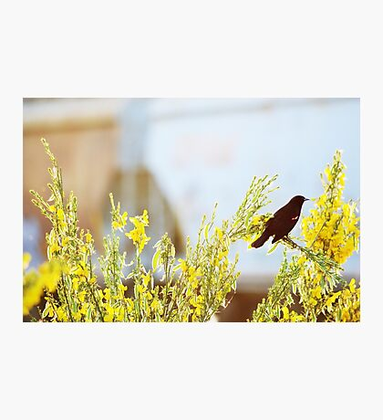 Red wings, yellow flowers Photographic Print
