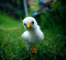 Just another chick with attitude. by rohitsabu