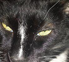 Tux the Cat #6 by Matt Burke