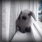 NOW THAT I JUMPED THIS HIGH...QUESTION IS WILL THEY FIND ME?? CUTE RABBIT PICTURE AND OR CARD by ✿✿ Bonita ✿✿ ђєℓℓσ