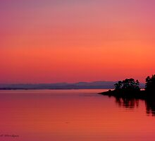 June 1st in Port Hardy, BC by Gail Bridger