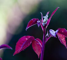 Gloss red nature?? by Christopher Prionas