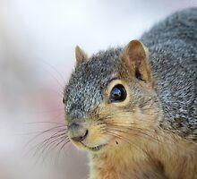 Squirrel Portrait by LynyrdSky