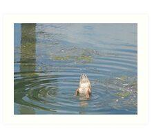 duck Art Print
