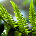 Ferns by Victoria Kidgell