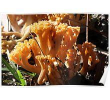 Fungi Season 29 Poster