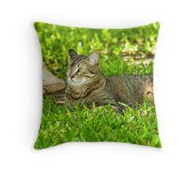 Cat and bird bath Throw Pillow