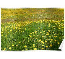 Spring Joy Poster