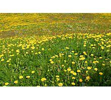 Spring Joy Photographic Print