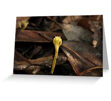 Fungi Season 30 Greeting Card