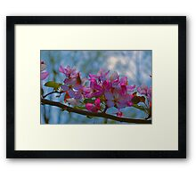 Pink And Blue Framed Print