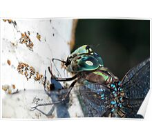 Dragonfly Head Poster