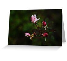 Dark Pink Roses Greeting Card